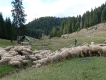 Padišska Planina,pohorie Apuseni Rumunsko