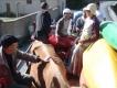Ako sme išli kajakovať s kravou