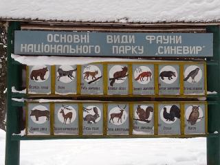 Skialpinizmus na Ukrajine alebo ako prišiel bluegrass na Zakarpatskú Rus