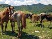 Rumunská Transalpina aTransfagarasan