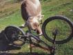 Šport a fauna,flóra – prekvapujúce stretnutie na fotografii 5.miesto Vlado Ceniga,James