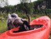 Šport a fauna,flóra – prekvapujúce stretnutie na fotografii 6.miesto Matej Fabiánek,BK Iuventa